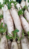 新鲜的萝卜在市场上 库存图片