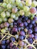 新鲜的葡萄在克利特希腊 免版税库存照片