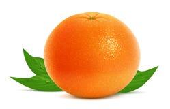 新鲜的葡萄柚 库存例证