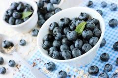 新鲜的蓝莓、伟大的越桔或者沼泽越橘 图库摄影