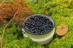 新鲜的蓝莓在森林里。 免版税库存照片