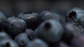 新鲜的蓝莓极端特写镜头,慢动作,宏观英尺长度 影视素材