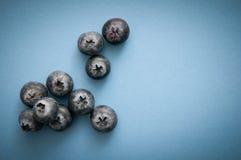 新鲜的蓝莓,在蓝色隔绝的蓝莓,深在抗氧剂上 免版税库存照片