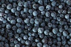 新鲜的蓝莓,小组蓝莓 库存照片