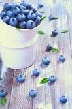 新鲜的蓝莓 库存图片