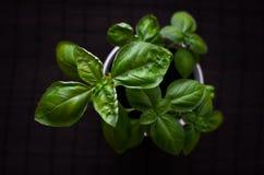 新鲜的蓬蒿植物从上面黑暗的背景的 免版税库存照片