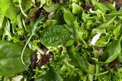 新鲜的蔬菜沙拉用菠菜、芝麻菜和莴苣 库存图片