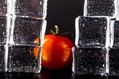 新鲜的蕃茄和湿冰块在黑背景 有选择性的fo 图库摄影