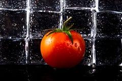 新鲜的蕃茄和湿冰块在黑背景 有选择性的fo 免版税库存照片