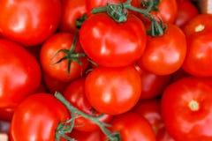 新鲜的蕃茄照片庄稼  库存图片