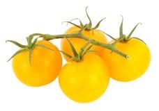 新鲜的藤成熟的琥珀色的蕃茄 免版税库存图片