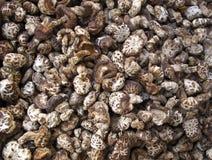 新鲜的蘑菇堆 图库摄影