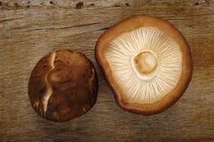 新鲜的蘑菇椎茸 免版税库存照片