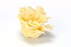 新鲜的蘑菇牡蛎 库存照片