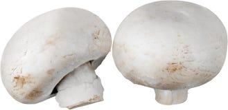 新鲜的蘑菇蘑菇 查出在白色 库存照片