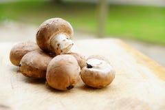新鲜的蘑菇 库存照片