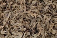新鲜的虾在市场上 免版税库存照片