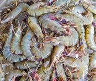 新鲜的虾在市场上 免版税图库摄影