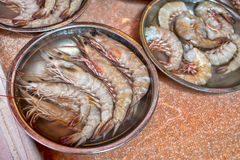 新鲜的虾老虎 免版税库存图片