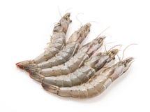 新鲜的虾/大虾 库存图片