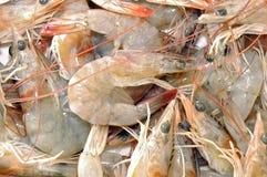 新鲜的虾 免版税库存照片