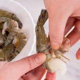 新鲜的虾 库存图片