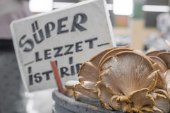 新鲜的蚝蘑用模糊的超级口味牡蛎在柜台标记后边在一个典型的蔬菜水果商义卖市场在土耳其 库存照片