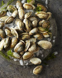 新鲜的蛤蜊和冰在盛肉盘 免版税库存照片