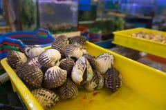 新鲜的蛤蜊居住 库存图片
