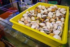 新鲜的蛤蜊居住 免版税库存图片