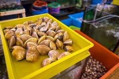 新鲜的蛤蜊居住 免版税库存照片