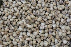 新鲜的蜗牛食物 免版税图库摄影
