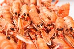 新鲜的蝉虾关闭。软的焦点。 免版税库存图片
