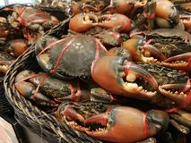 新鲜的螃蟹在超级市场 库存图片
