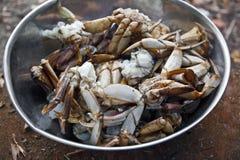 新鲜的螃蟹 免版税库存照片