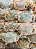 新鲜的螃蟹 免版税图库摄影