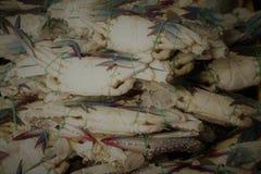 新鲜的螃蟹 库存照片