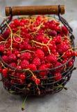 新鲜的被分类的果子和莓果 图库摄影