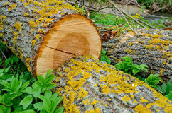 新鲜的被堆的树 库存图片