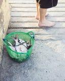 新鲜的被抓的鱼 免版税库存图片