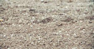 新鲜的被耕的土地 培养背景可能弄脏使用 股票视频