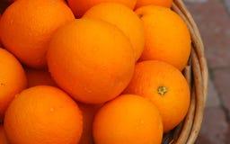 新鲜的被采摘的成熟水多的桔子篮子  免版税库存照片