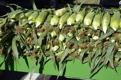 新鲜的被采摘的玉米待售 库存照片