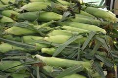 新鲜的被采摘的玉米待售 免版税库存图片