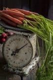 新鲜的被采摘的萝卜和红萝卜 免版税图库摄影