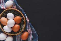 新鲜的被隔绝的鸡红皮蛋,有机耕田背景 免版税库存照片