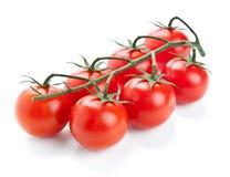 新鲜的西红柿的枝杈在白色的 库存图片