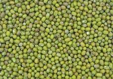 新鲜的豆 免版税图库摄影