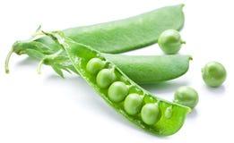 新鲜的豌豆在荚内包含 库存照片