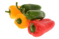 新鲜的辣椒的果实 库存图片